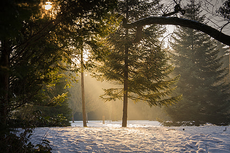 trees covered with snow with sun rays