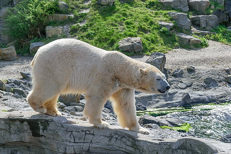 polar bear on rock formation during daytime