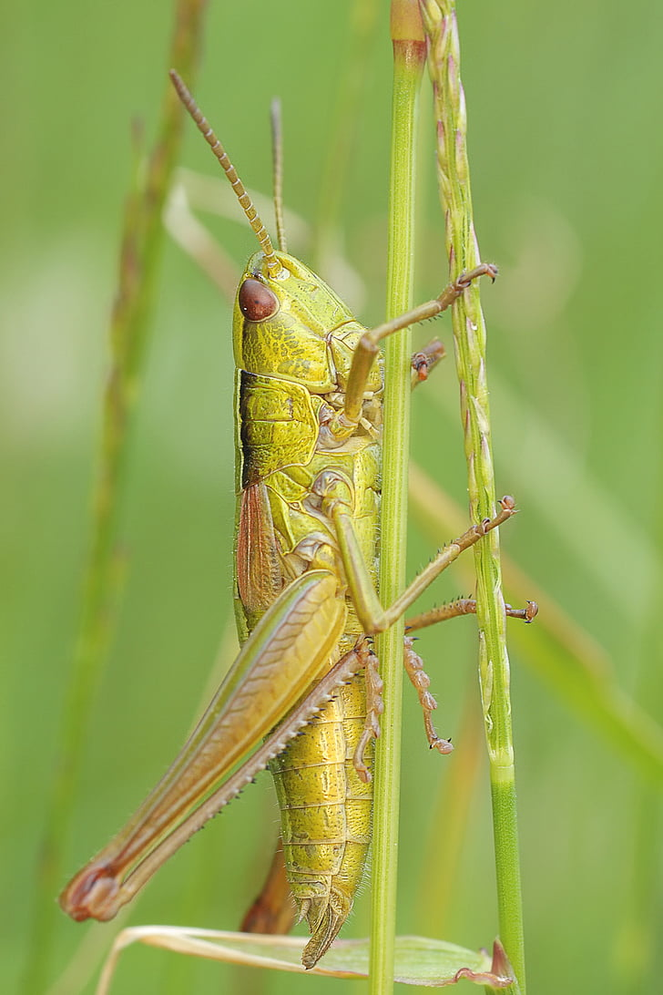 shallow focus photography of green grasshopper during daytime