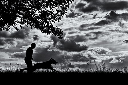 silhouette of dog and man runs on grass field