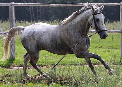 white and gray stallion running on grass field during daytime