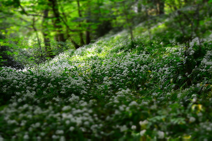 depth of field, flora, flowers, forest, nature, outdoors