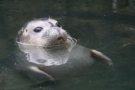 seal on body of water