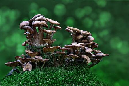 photography of mushrooms