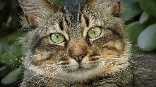gray and black tabby cat