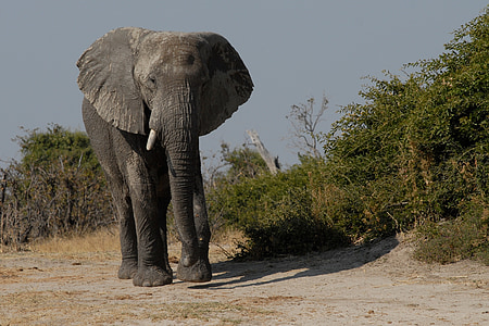 elephant beside leaves during daytime