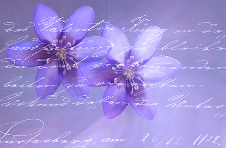 two purple petaled flowers with text overlay