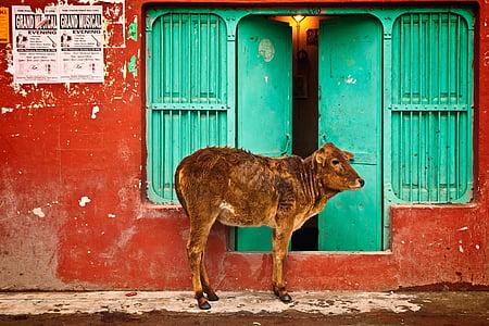 brown calf standing near green wooden doors