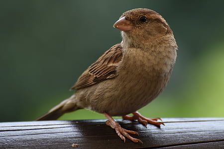 selective focus photography of brown canary