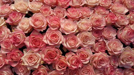pink rose lot