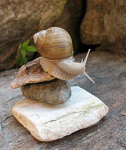 brown snail on brown balance rock