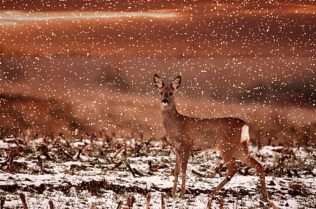 brown deer during snow time