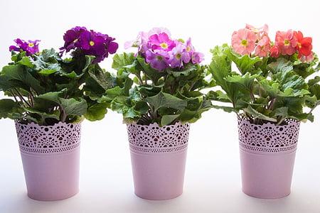 several flower plants