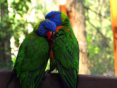 two blue-and-green parrot on top brown surface