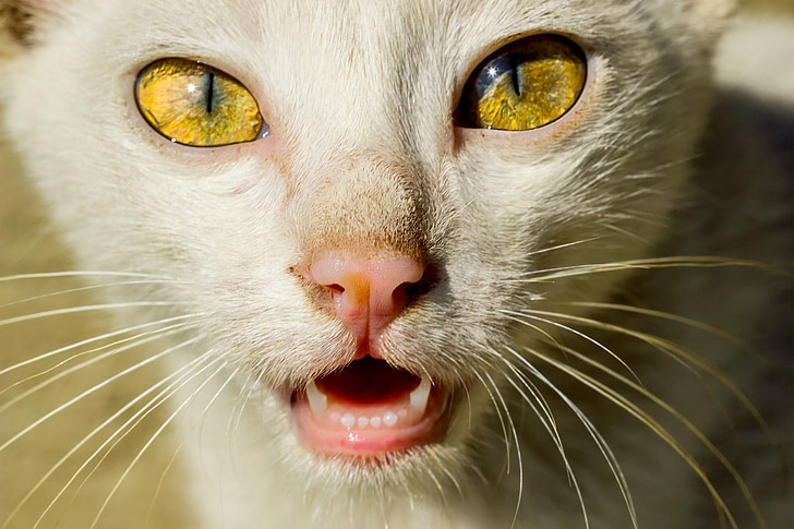 closeup photo of short-furred white cat