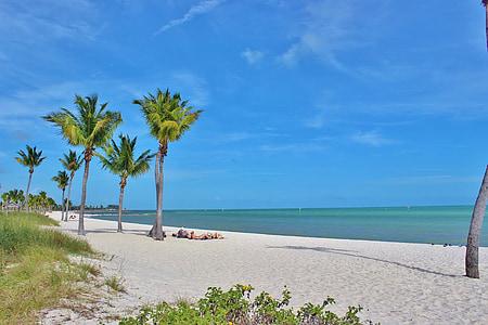 palm tree on shoreline