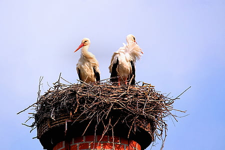 two white-and-black birds perching on orange tower