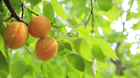 three round orange fruits