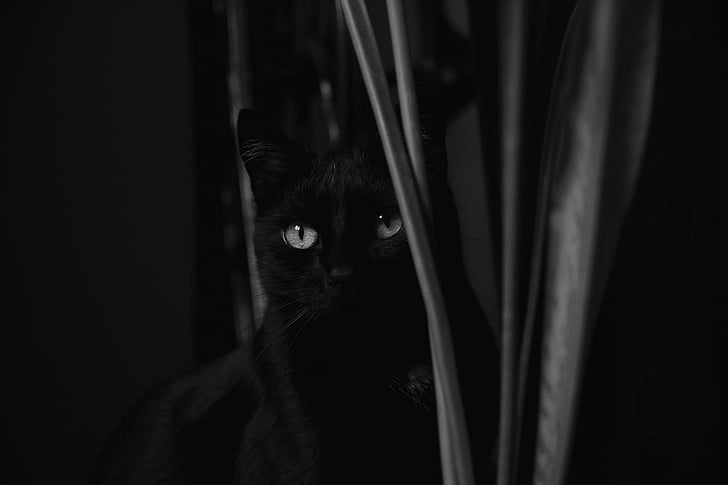 greyscale photography of cat