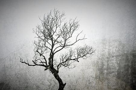 grayscale tree