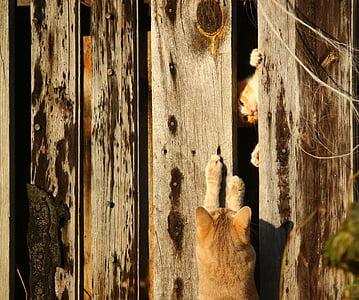 orange cat on gray wooden wall