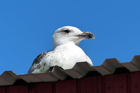 low angle of of white and gray bird on roof
