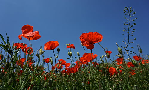 red flower field photo during daytime
