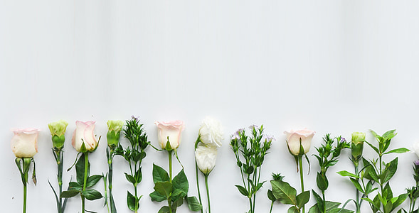 pink roses on white wall