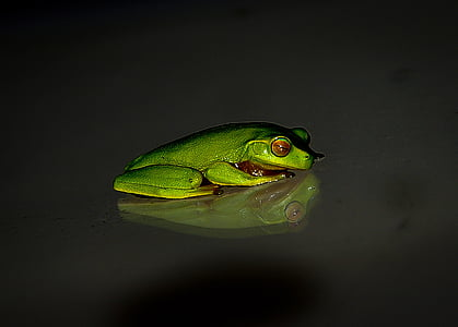 photography of tree frog