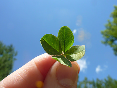 person holding four leaves