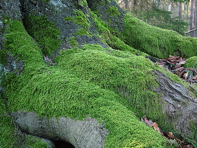 green grass growing on tree roots