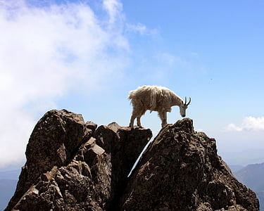 brown goat on top of rock formations during daytime