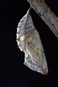 shallow focus photography of gray and green cocoon