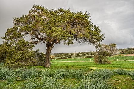 green tree under dark sky