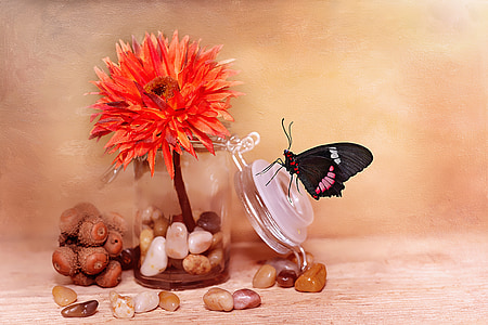 black and pink butterfly perched on clear glass lid with orange clustered flower
