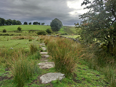 green grass beside green leafed tree under gray and white skies