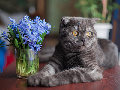 tilt-shift photography of gray cat beside blue flowers on vase