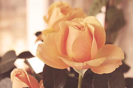 shallow focus photography of yelloe flower