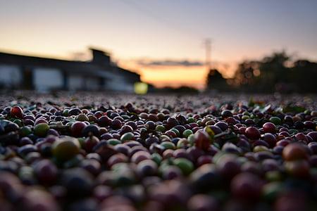 macro shot photography of beans