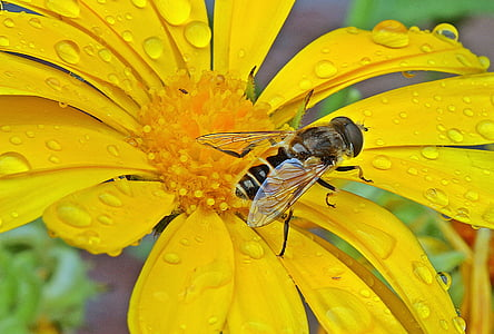 hoverfly perched on yellow petaled flower