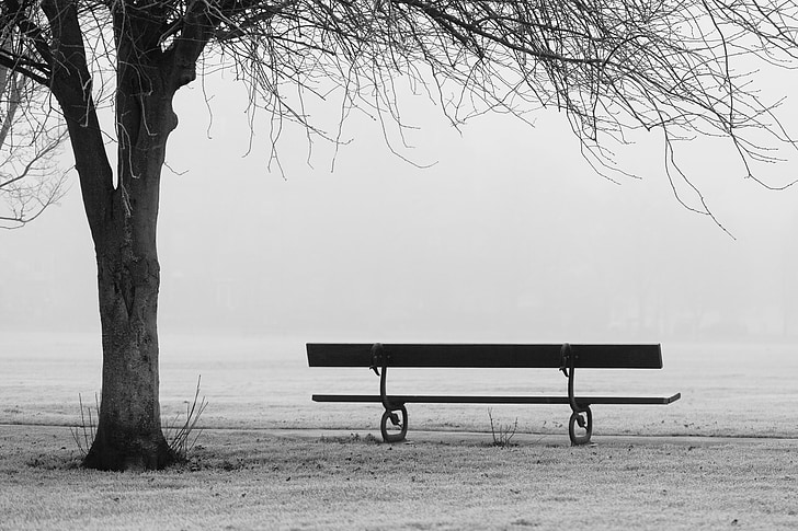 grayscale photo of empty bench near tree