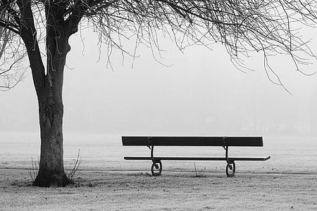 grayscale photo of empty bench near tree