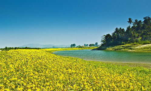 photo of green petaled flowers beside lake