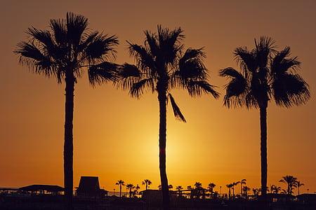 three coconut tree silhouettes
