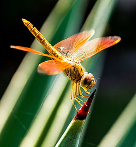 closeup photography of brown dragonfly perched on green leaf during daytime
