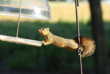 selective focus photography of squirrel