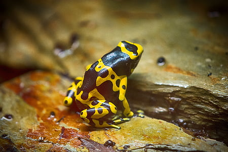 black and yellow frog on stone