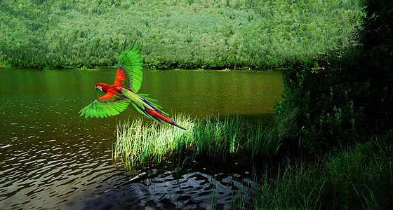 red and green parrot and body of water