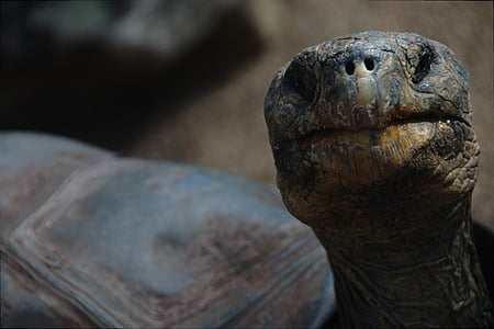 closeup photography of brown turtle