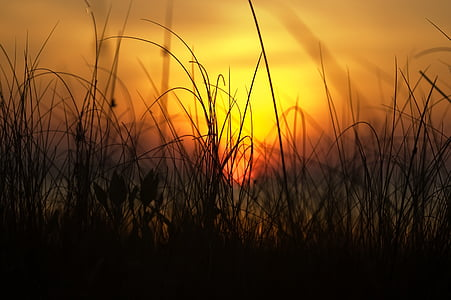 silhouette of grasses during sunset